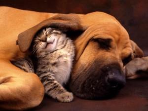 pies z kotem